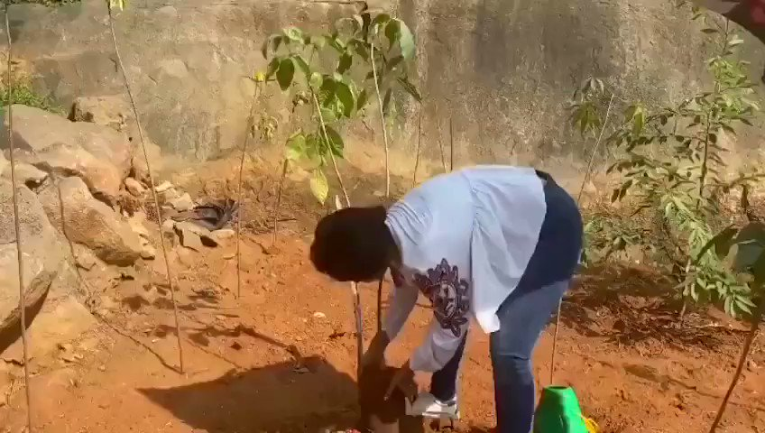 . @Gajjarmonal accepted #HaraHaiTohBharaHai #GreenindiaChallenge from @harika_alekhya Planted 3 saplings.🌱  Further, She nominated @makapa_anand @MalharThakar @MitraGadhvi @Actor_Krishna to plant 3 trees & continue the chain.  specially thanked @MPsantoshtrs for this initiative.