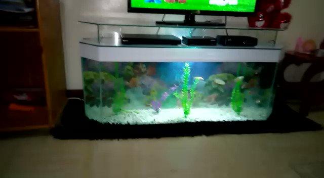 Tv Stand Aquarium +254795342194 #janemugo #sonko #Arteta #Lampard  #Allegri #Werner #NASA #Tuchel #Nigeria #Nairobi #Uganda #JamesBond #safaricom #datadealoftheday #Roman #PaulNdunguExposed #ChampionsLeague #gilmour #RaoOnKameme #moseskuria #meru #murkomen #kibicho #Somalia