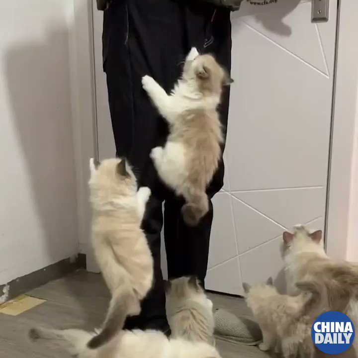 #OneMoment You can't get upset about your pants being torn — especially when it's cute kittens climbing you like a cat tower! #cat #kitten