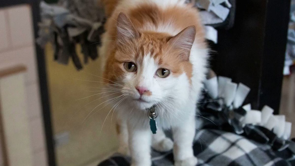 185 animals found happy new beginnings last week! 🐾❤️ Ginger the cat was one of the lucky pets adopted into loving homes. 😺 #MondayMotivation #AdoptDontShop
