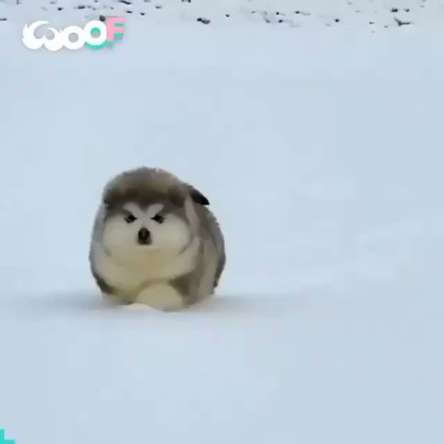 So cute ❤️❤️ #animals #animal #funnyvideos #cute #cat #cats #dog #doglover #dogs #catlover #loveanimals #animalprint #animallovers #instaanimal #komikvideolar #kedi #komikvideo  #晚安 #有趣的動物 #快樂的動物 #Animauxheureux #Animalifelici #GlücklicheTiere