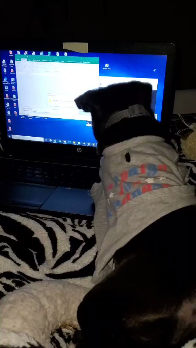 @StephenKing And onyx decided to telework.. #pethumor #carlin #pug #cutepet #cutepets #puppy  #puppies #baby #babies #fruggle #puggle #teleworking #computer #pocketpet #cutebaby #dog #pet #cute #funny #covid #humor #covidhumor #pugpuppy #pughumor