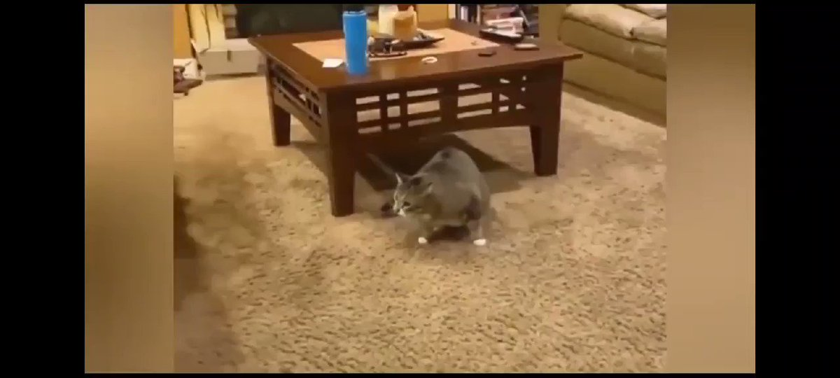 Cats are so funny 🤣😂 #cats #funny #cat #fails