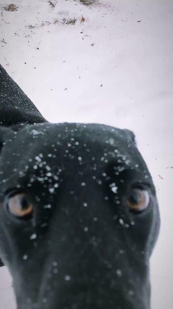 Norma Jean // aka THE CHOMP #snowday