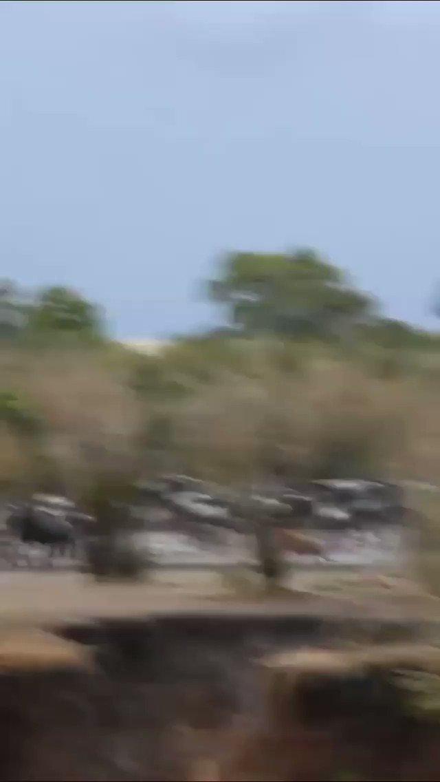 Wildebeest runs into water to escape the hyena.  #serengeti #masaimara #etoshanationalpark #zanzibar #africa #santiago #kenya #southafrica #beautiful #girl #love #africageo