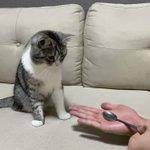猫もビックリ!手品を見た猫のリアクションが完璧w
