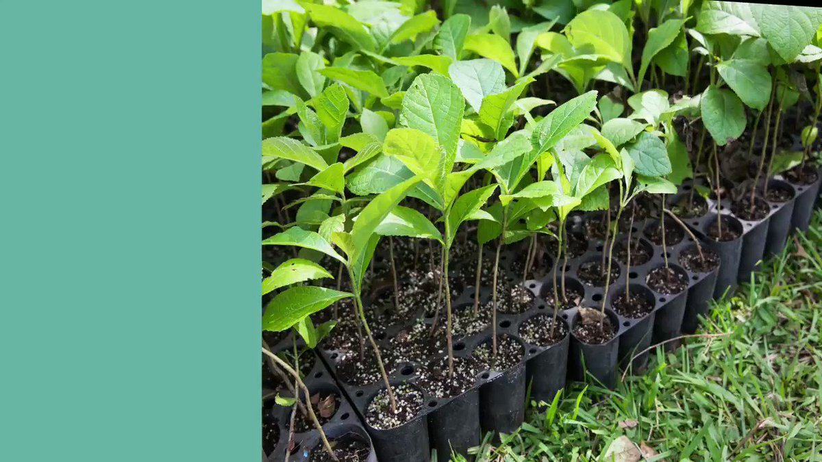 We're thrilled to announce that a client referred to us by Anne Heeke has resulted in a new project. To celebrate, we'll be planting 100 trees in the Amazon Rainforest. What a wonderful way to share new beginnings. #SustainabilityPledge #StartSmall