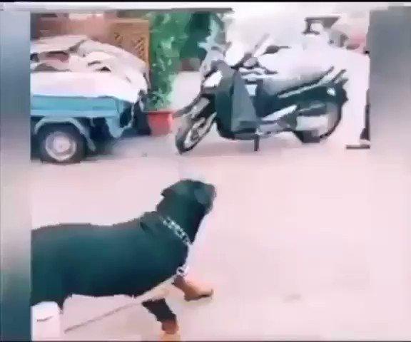 #wednesdaythought  #Fuckery I love dogs 😂😂