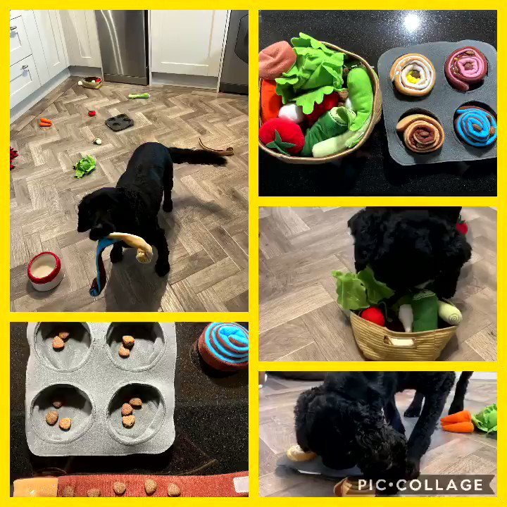 Thank you @IKEAUK . Not exactly the consumer you intended them for, but works perfectly for our needs.  Perhaps you should develop a #canineenrichment range 😂 #ditchthebowl. #dogsoftwitter #wednesdaythought #foodie