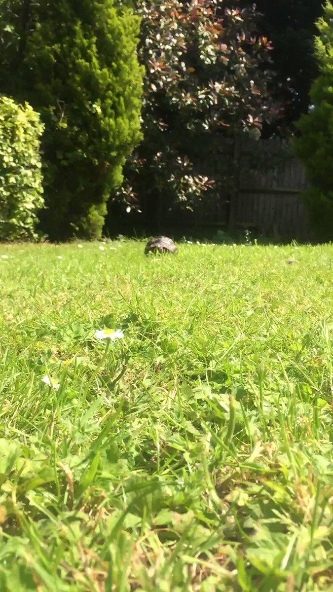 @DannyDeraney @dionnewarwick Nah..  My tortoise would blow that tortoise away...easy. ⬇️⬇️ #dionnewarwick