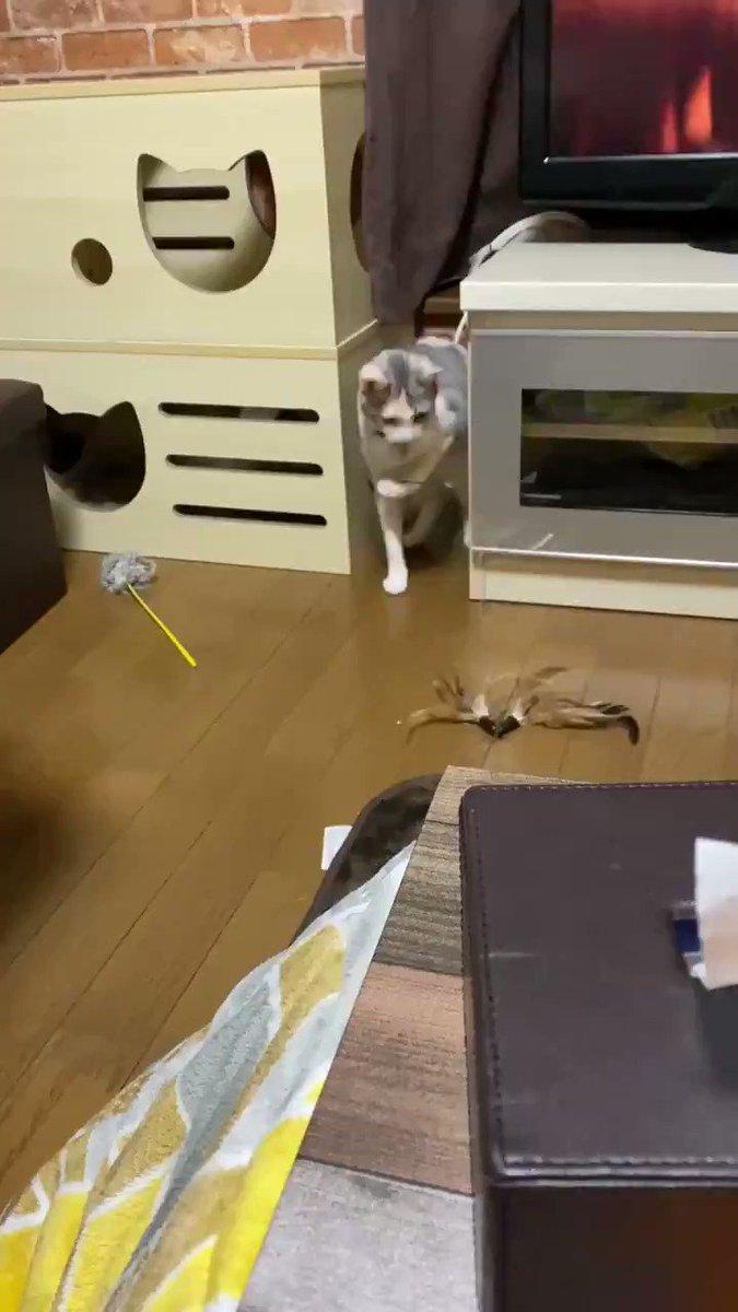 """猫が""""釣り""""をしている!?一体どういうこと!? おもちゃを持って不思議な動きをする猫が気になって仕方ない"""