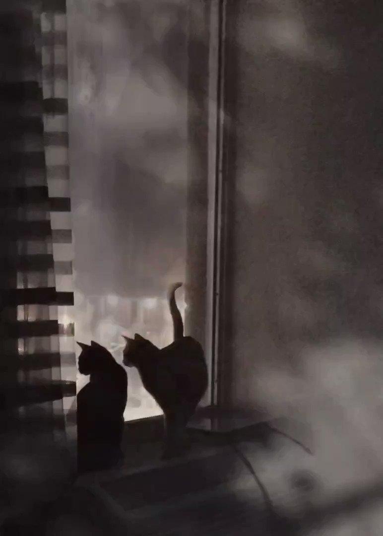 """""""The Storm"""" is coming for YOU! @mtgreenee @RepMTG #catsjudgingmarjorie"""