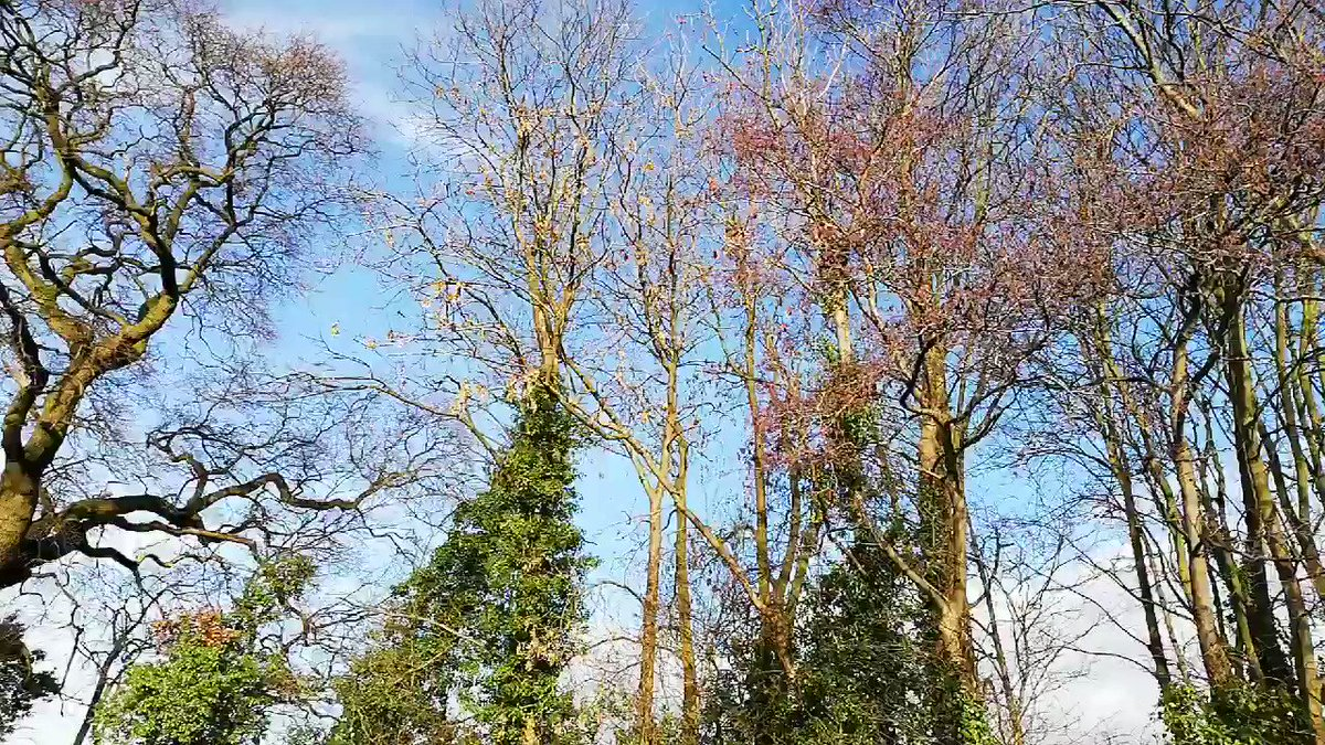 Birds tweeting away beautifully this morning in the sunshine #Winterwatch @BBCSpringwatch @ChrisGPackham @MeganMcCubbin @IoloWilliams2