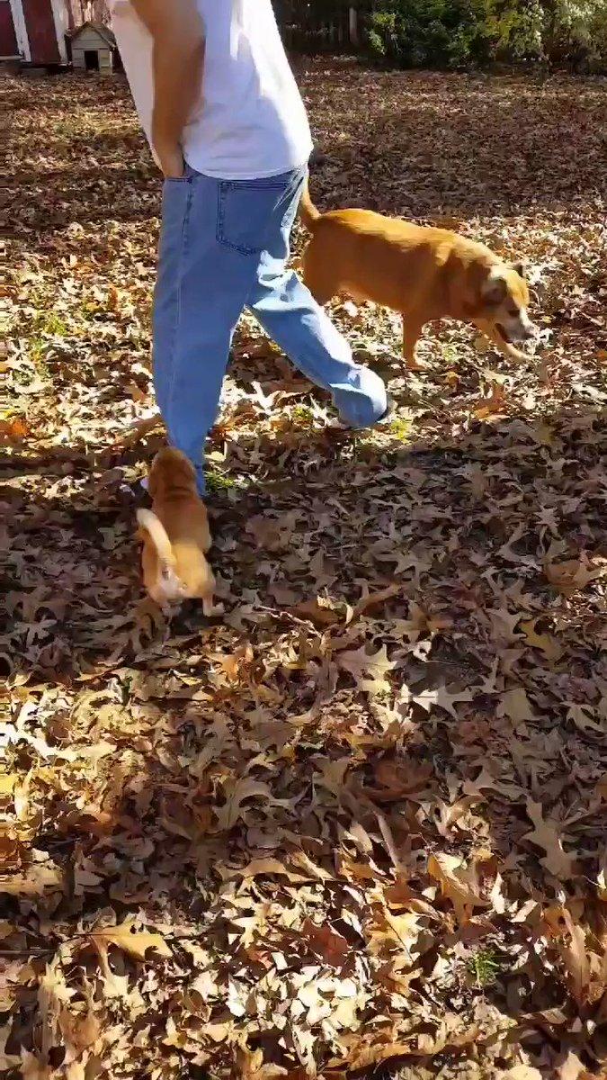 #ThrowbackThursday Fun! 😀 Lot's & Lot's Of Fun!  #DogsofTwittter #dogs #thursdaymorning