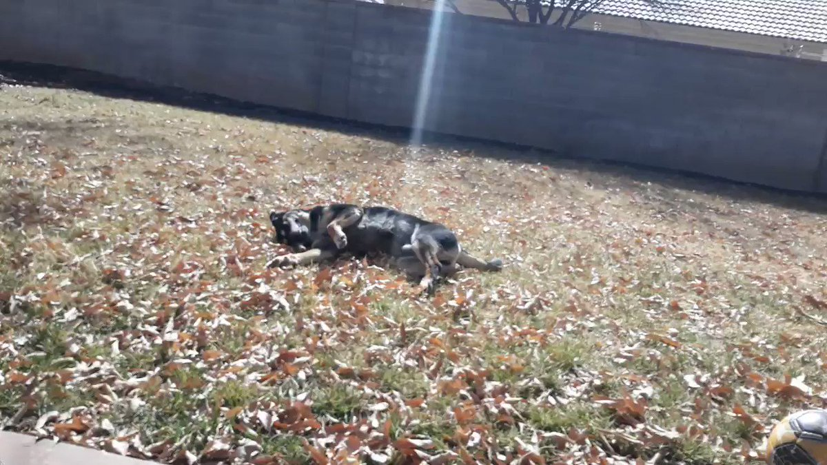 If only we can all enjoy our day as much as my dog enjoys rolling in the grass.