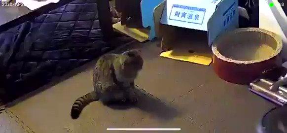 ルンバ「動けません」と連絡→犯人は猫ちゃんだった! @chonpy5010 さんから