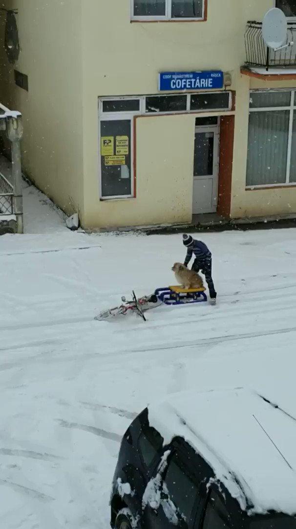 「犬ぞりを楽しむルーマニアの少年」Kid from Romania enjoying the snow with his dog :)そっちかーい!優しい少年。イヌの名前はPufiで少年の名前はAndreiだそう。