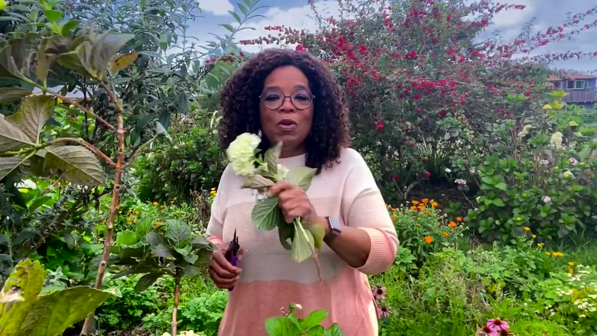 WE ARE BACK! On February 13 we are returning with WW Presents: Oprah's Your Life in Focus: Be the Love You Need Live Virtual Experience to help people gain a fresh perspective this year and start their journey towards health and wellness.