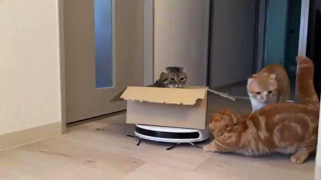 かわいいたまに運転ミスする掃除機ライダーの猫ちゃん 期待を裏切らない100点のオチに「何回も見ちゃう」の声
