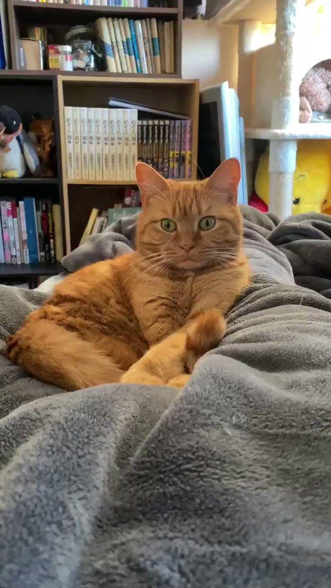 ブルブルに動じない小麦#猫好きさんと繫がりたい #猫 #まるどら