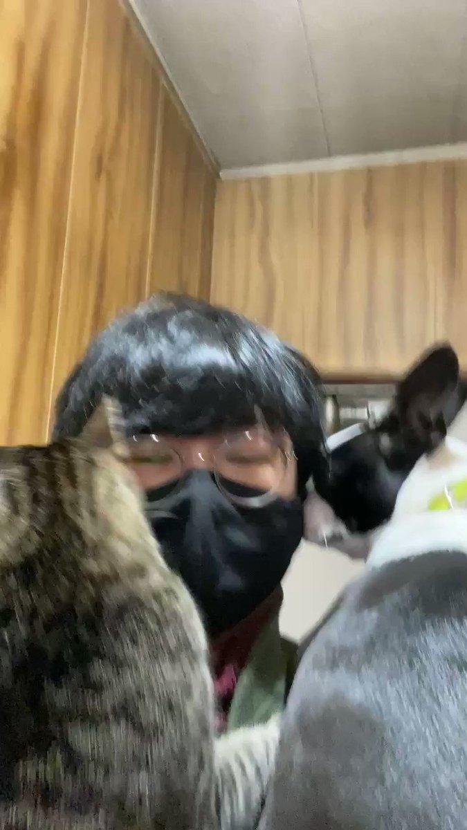 犬の散歩に自分も付いて行くと当たり前の様にしがみついてくる猫。#我が家のにゃんこ自慢