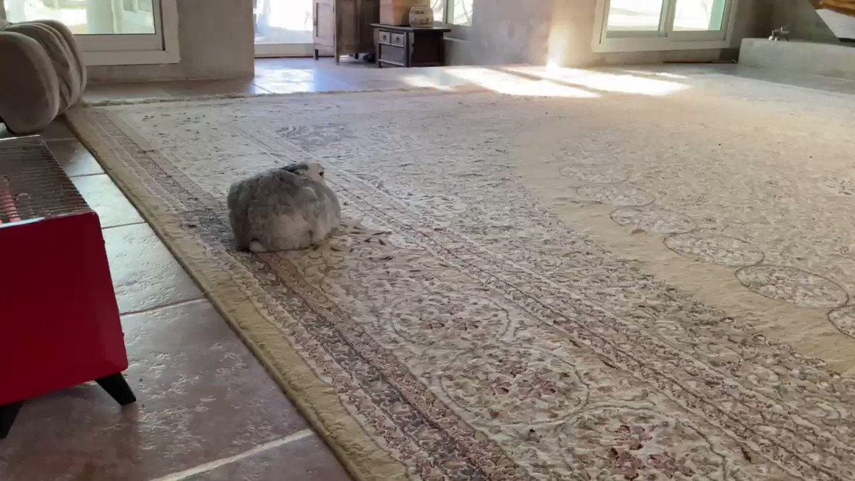 この微妙なスペースは、あびさん来るの想定してだったのだろか、ペティさん。