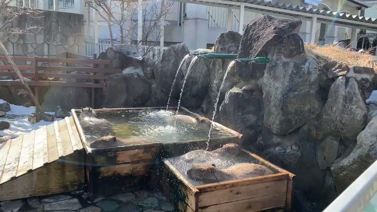 カピバラ温泉♨️朝風呂‼️眩しい贅沢なお時間です。#カピバラ温泉#朝風呂#那須どうぶつ王国