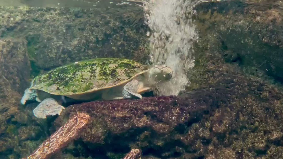 ジャグジー#ヒラリーカエルガメ #お気に入りの場所のようです