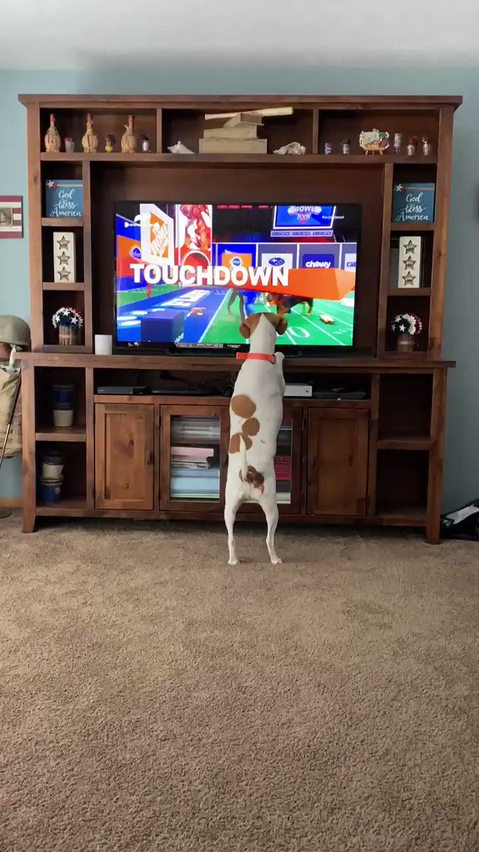 #PuppyBowlXVII #SuperBowl Buddy is loving this!!!
