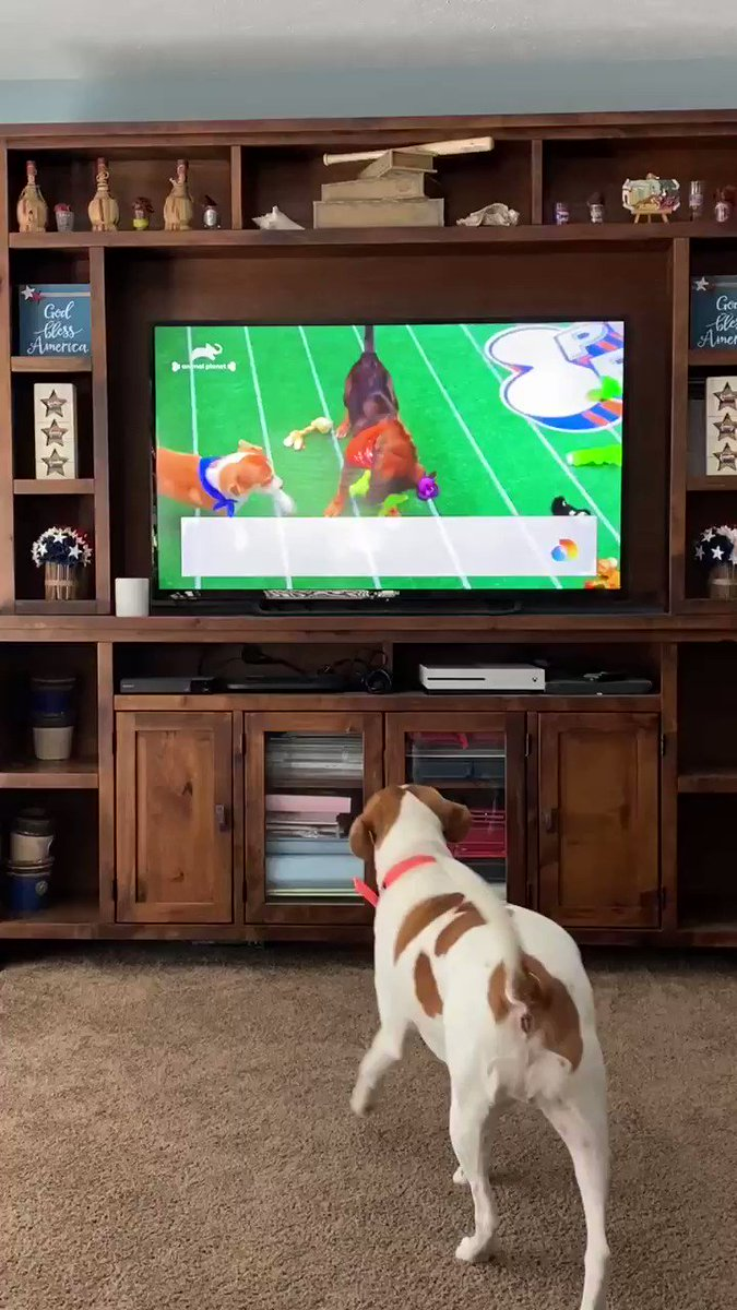 #PuppyBowlXVII #SuperBowl Buddy is crushing on some of the ladies! 🤣🥰