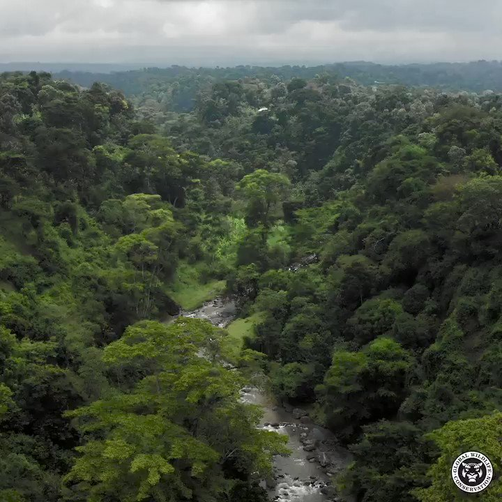 In a letter to local activists, 3 global manufacturing companies - @bmwgroup, @tetrapak & Schüco - have signaled their concern over the use of bauxite sourced from Ghana's Atewa Forest for aluminum. #SaveAtewaForest #AtewaTillEternity