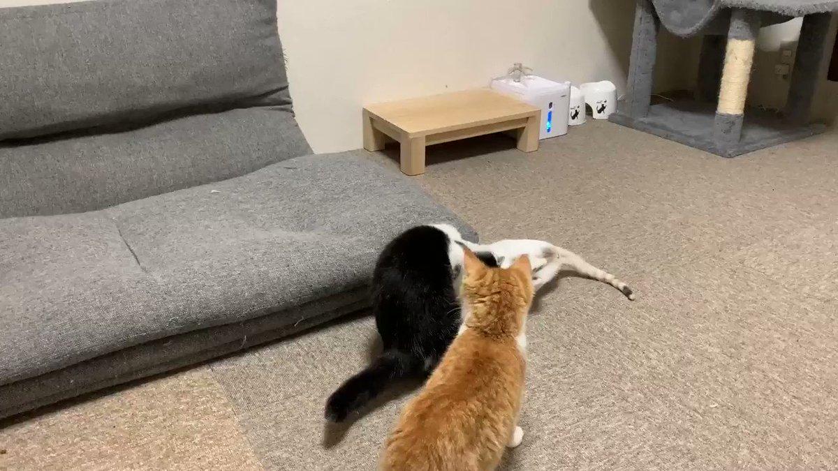 ソファの裏が分かっていない子猫
