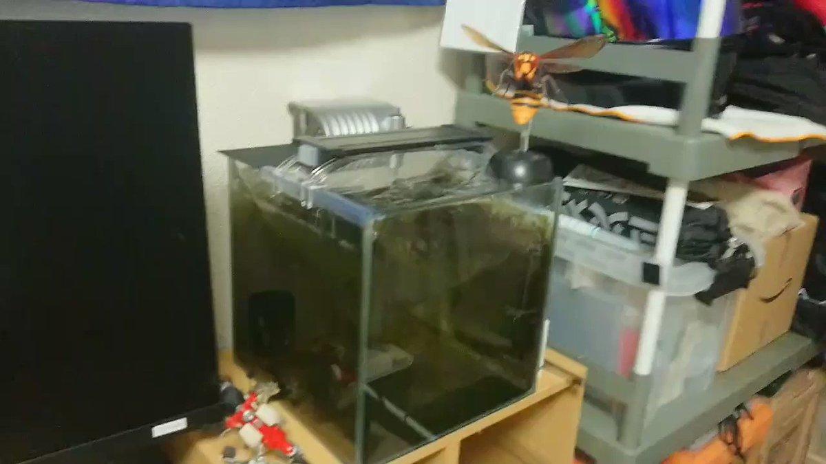 ちなみに今回の地震は初期揺れでヤバいと思って動画は撮ってた。