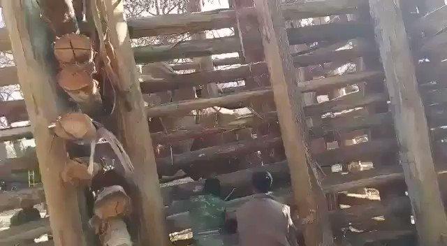 @srinivasanoffl @CMOTamilnadu @narendramodi @PMOIndia The Imprisonment and torture of a wild bull is a heinous act against wildlife. Respect #WorldWildlifeDay and #ReleaseShankar #InYourHandsIndia