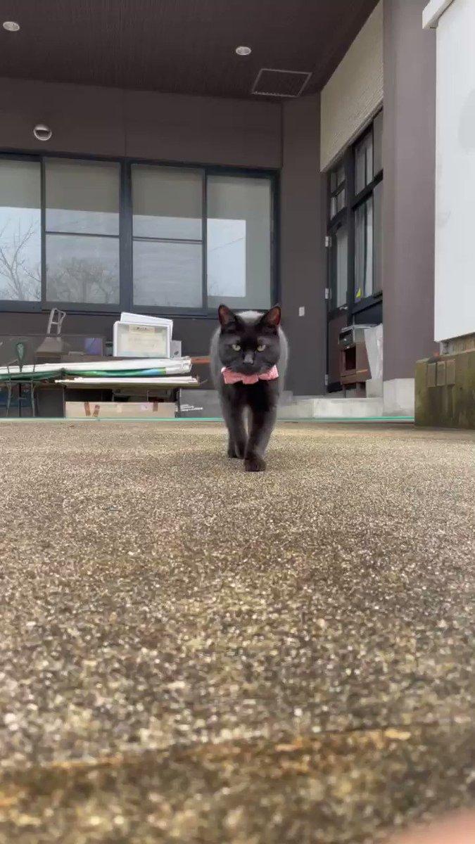 『おはニャー!🐈⬛Good morning ! 』(2021/ 2/15朝)🎨ケンちゃんの挨拶で、目が覚めましたニャ。#尾道市立美術館 #猫 #黒猫 #cat