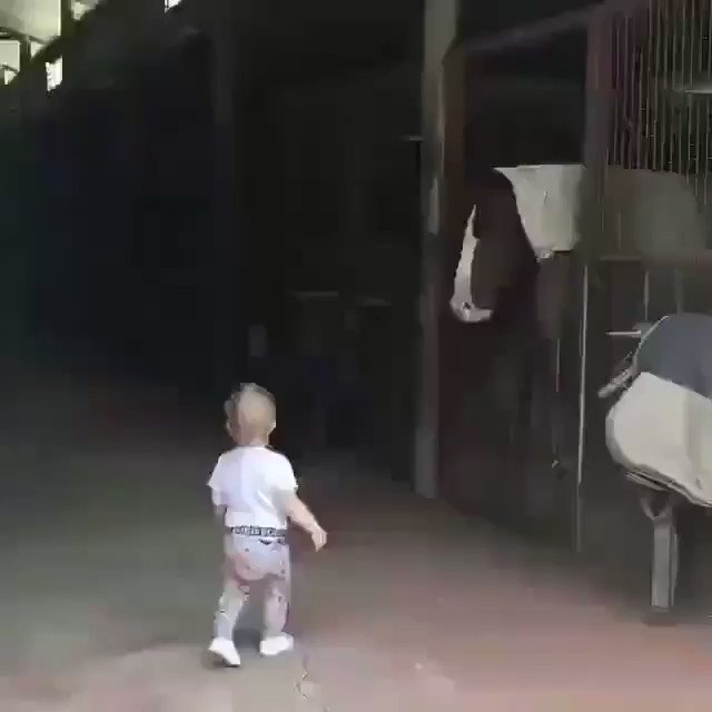 Because you want to see a baby greet good morning to the horseys! 🐎 https://t.co/FzWtX3nW2d