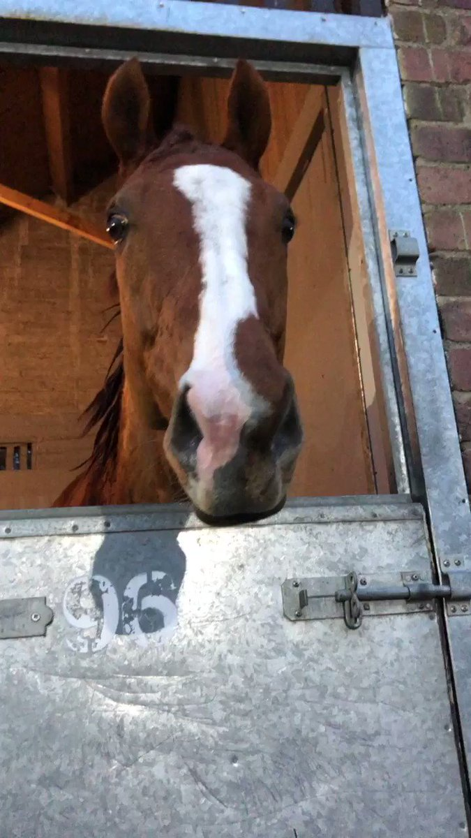 I think Society Red is rather pleased with his win tonight @NewcastleRaces. @RichardFahey