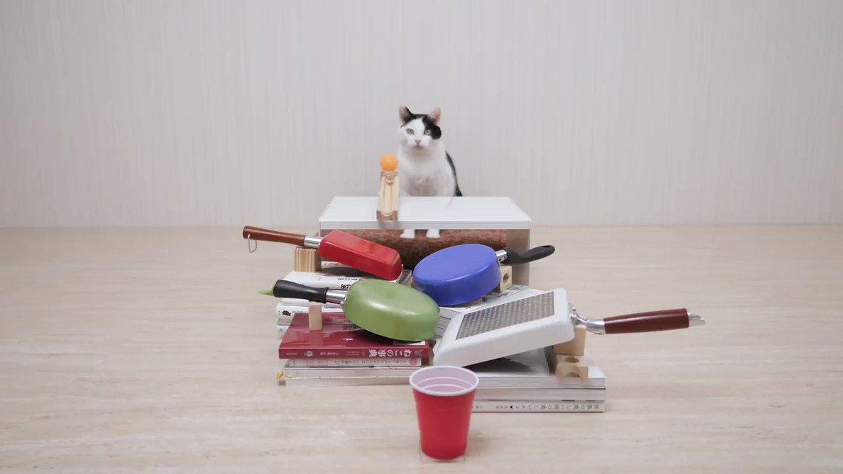 諦めにゃければきっと叶う  #猫の日 #ねこの日