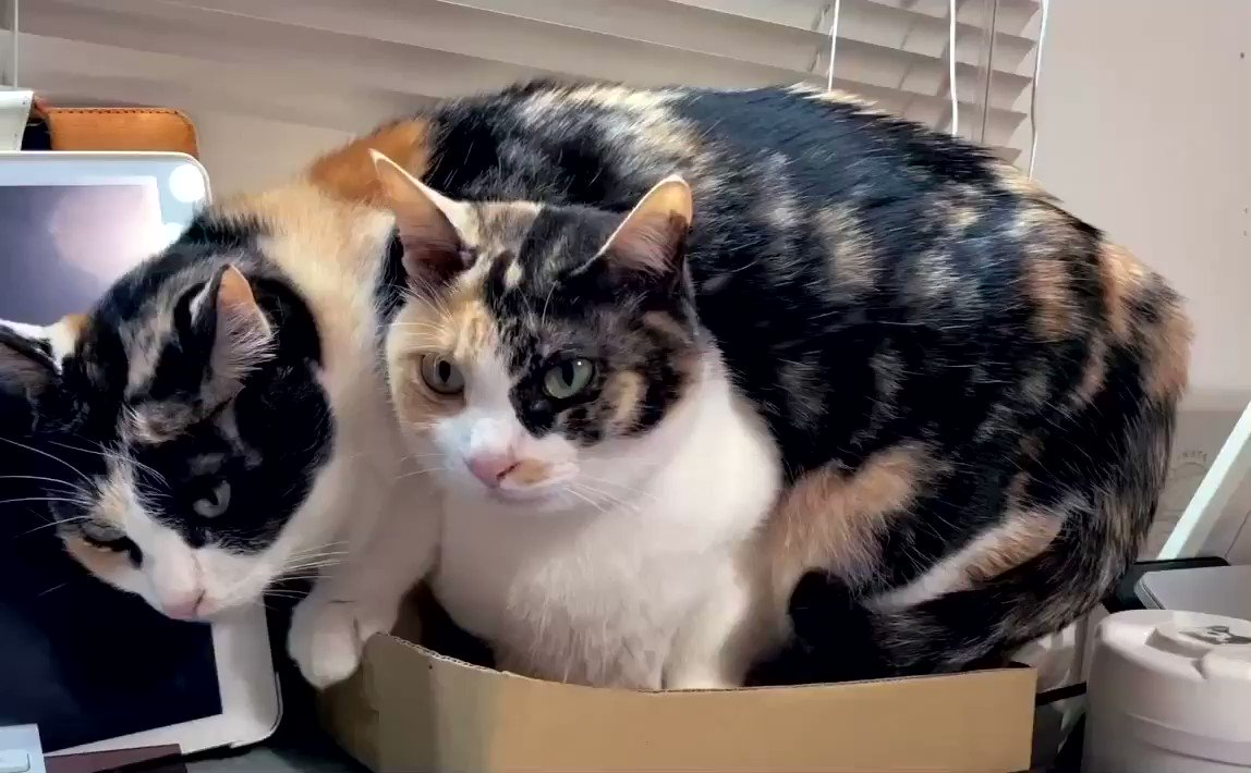 One box two cats😭😭