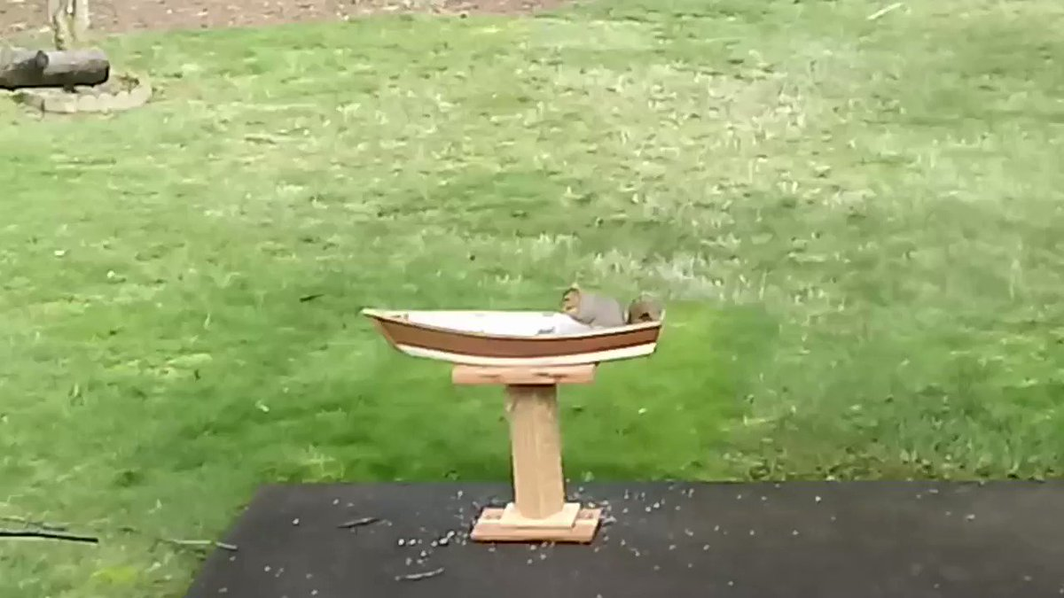 Squirrel in a boat.