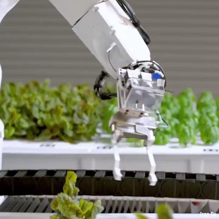 leave it to #robots where we can v/@VisiveAI  #futureofwork #agritech #AI #robotics @Nicochan33 @sebbourguignon @labordeolivier @DrJDrooghaag @JeroenBartelse @enricomolinari @CurieuxExplorer @AlbertoEMachado @alvinfoo @segundoatdell @YuHelenYu @ShiCooks https://t.co/6C5PaBzfLw