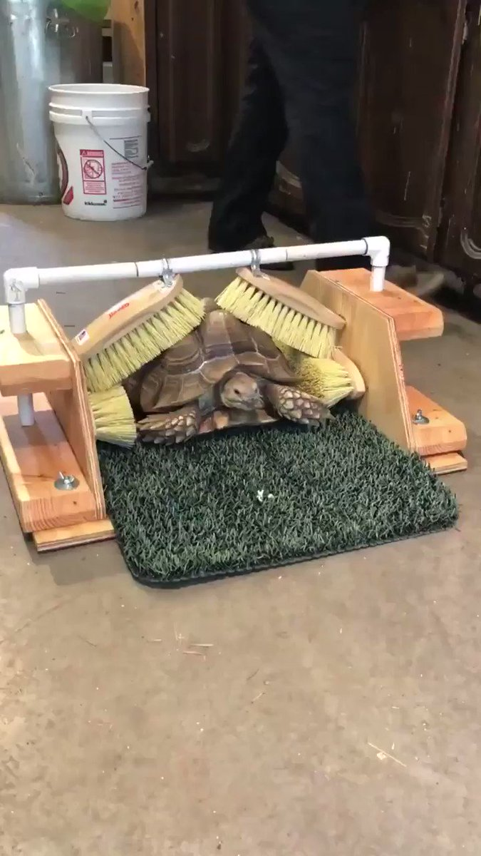 Are looking for a brilliantly-engineered self-service tortoise brush which impresses your customer with its outstanding brushing performance, effortlessly reaches every part of your tortoise's shell, and operates at a brushing pace that suits them? Look no further.