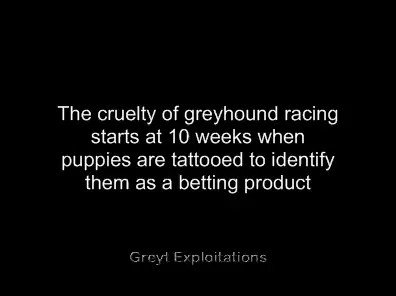 The cruelty of dog racing starts when puppies are just weeks old & are tattooed to identify them as a betting product for gambling. Please sign & share this petition to ban the cruelty  @piersmorgan @ZacGoldsmith @neil_parish  @DrNeilHudson @AAGR_UK
