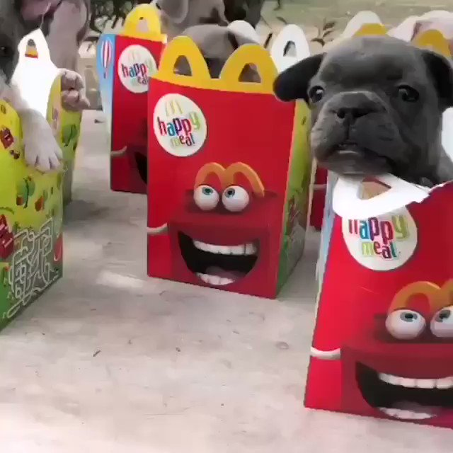 Replying to @DannyDeraney: Because you want to see puppy doggies in happy meal boxes.