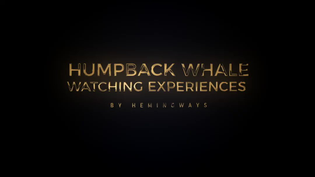 Far from the thundering hooves of the annual wildebeest migration, Hemingways Watamu will take any willing explorer aboard a boat on a half-day adventure to see the Humpback whales as they visit the warm shores of the Kenyan coast to calve and mate. Courtesy: @HemingwaysKE