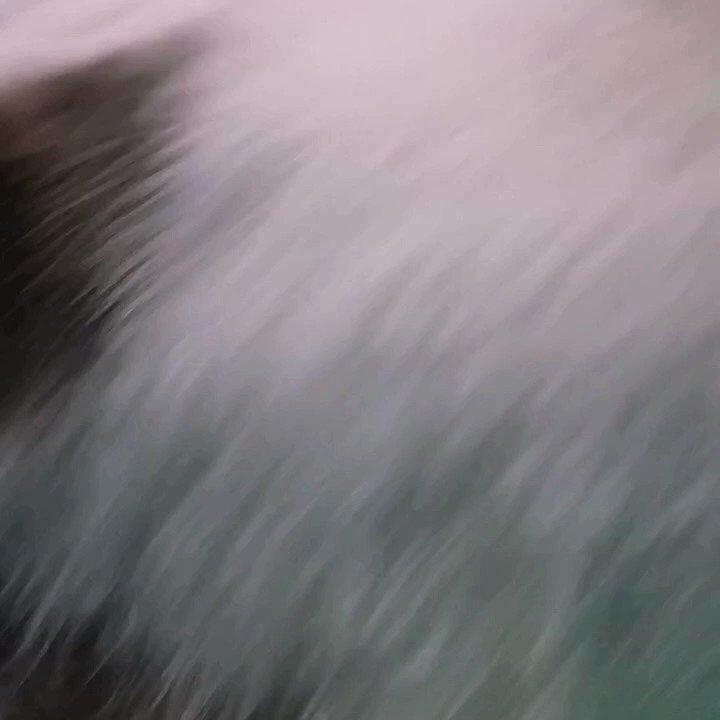 Cat no. 1 Dobby #cat #CatsOfTwitter