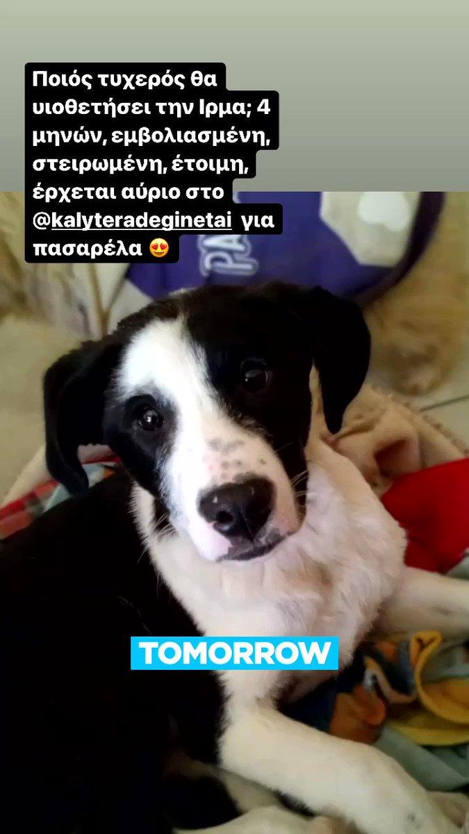 Puppy promo 😂❤️ @kalytera_alpha