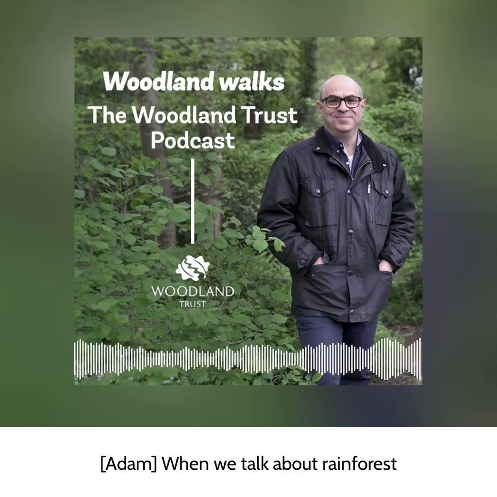In the latest Woodland Walks #podcast @AdamShawBiz chats to more of our staff about their fascinating stories and favourite woods, from Wales' rainforests to Yorkshire's magical Hackfall🌳  Listen now on Apple podcast and iTunes, Libsyn, or Soundcloud🎧