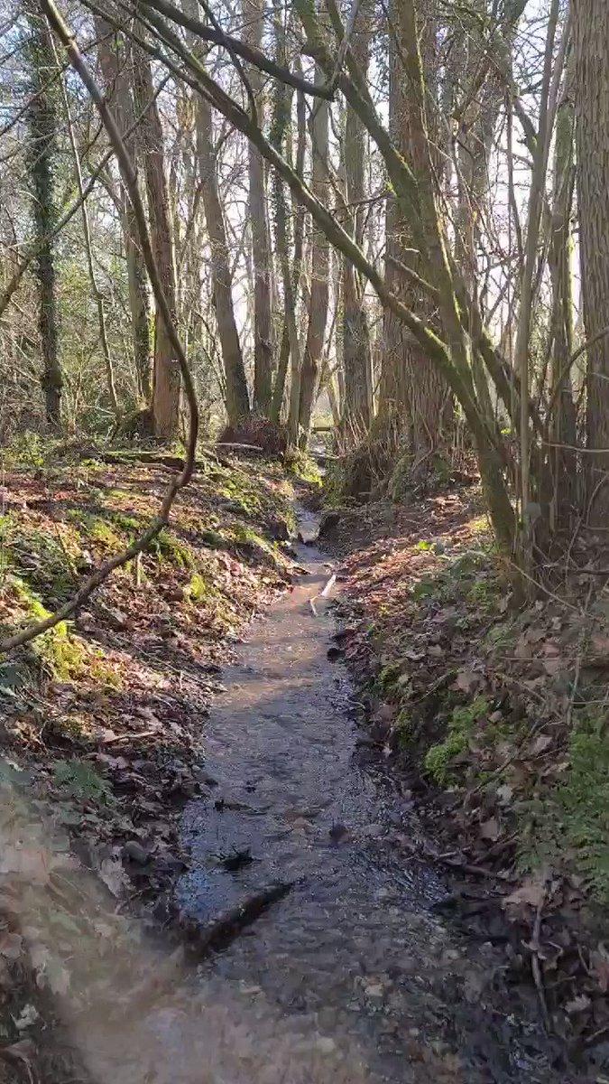 Saturdays are for Woodland walks 🌳 . . . #SaturdayVibes #SaturdayMotivation #WoodlandWalks #MyHappyPlace  #FamilyFunTime #Recharge #Sunshine #BertieBear #StaffieSaturday #StaffiesAreSofties #EclecticHound #IndieBiz #FamilyBusiness #LoveLocal