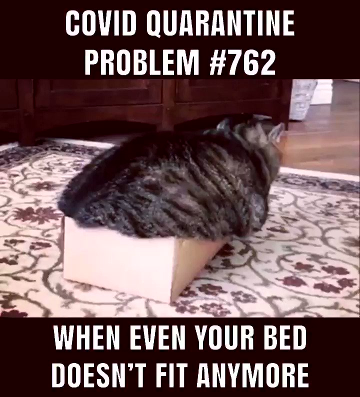 We feel your pain! Happy #Caturday!! 🐱🤣